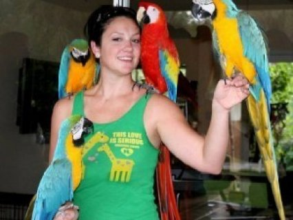 Beautiful Blue and Gold Macaw Parrots Adoption
