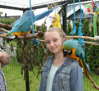Tame & Friendly Parrots, Macaws, African Grey, Kea