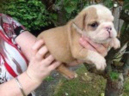 Kc Reg Show Potential Pupppies