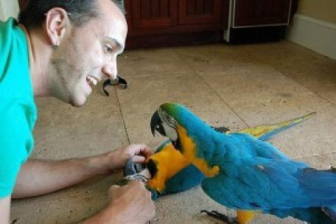Young and talking macaw parrots for rehoming.