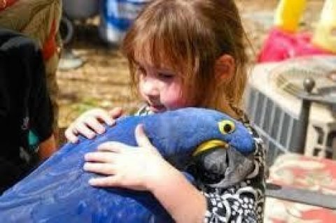 Beautiful and Talking Hyacinth Macaw Parrots for S