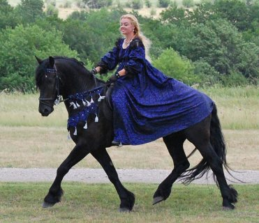 صور New Friesian Horse Available For Adoption 1