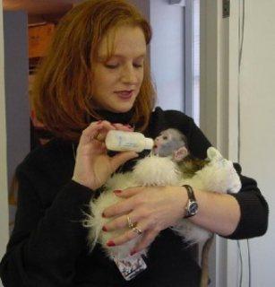 Tamed Capuchin Monkeys..............