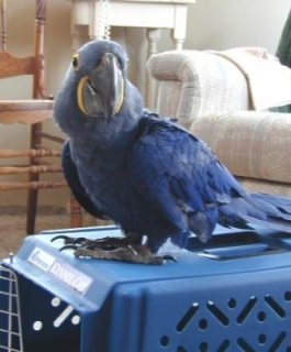 Beautiful Macaw and Parrot birds for Rehoming for