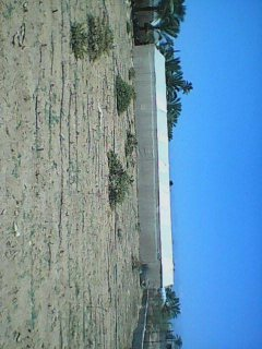 ارض زراعية بدير البلح للايجار