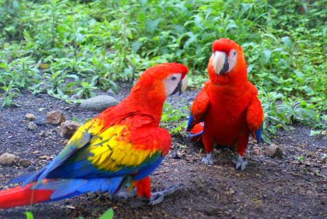 صور Macaw Parrots For Sale With Papers 2