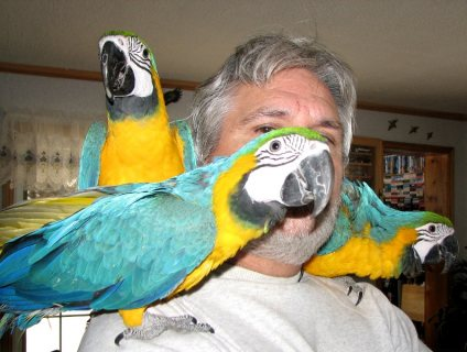 Beautiful Macaw Parrots Ready For You