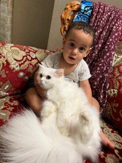 غازي نافذ ابراهيم ابوناصر وقطته