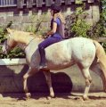 Confident well mannered 14.2hh mare for sale Teena