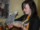 Talkative male and female African Grey parrots ava