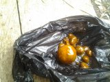High quality Cow/Ox gallstones for sale